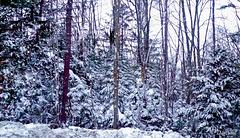 Beaucoup de neige...