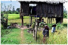 Campagne à Siem Reap (Cambodge)