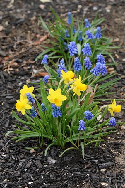 Spring flowers (Explored)
