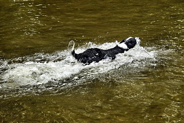 Doggy Paddle.