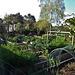 spring vegie garden