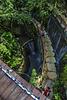 jungle look down: HFF