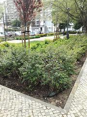 Small garden between Benfica's blocks - XXII
