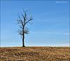 Last Tree Standing ...