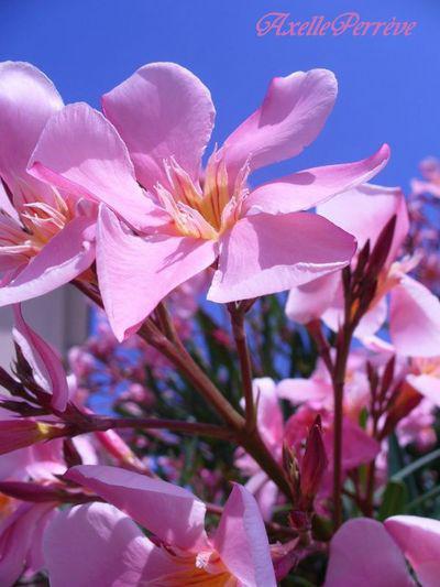 Fleurs pleines de couleurs