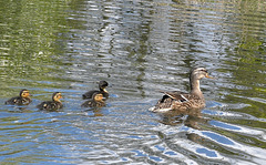 Family swim.