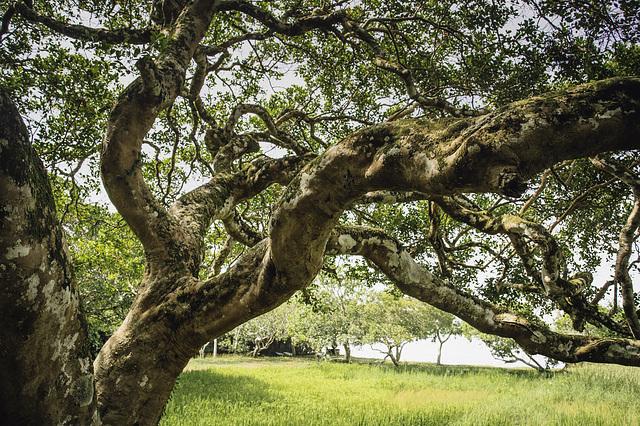 m' friend the tree