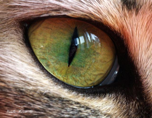 Eye Macro (Dame Judi Dench)