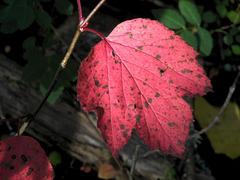 Autumn's greetings