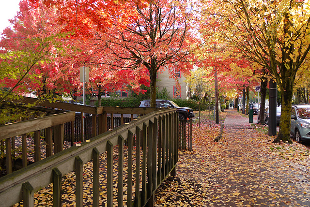 Autumn in Portland (or: a memory of fresh air)
