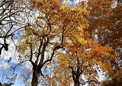 'Goldener November'