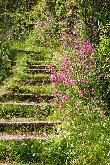 Flowery steps (PiP)