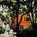 Das Fenster hinter Bäumen