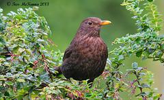 birdies 006 copy