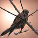 My friend the falcon