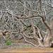 detail - Koko Crater Botanical Garden