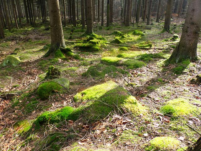 im Nadelwald oberhalb Osterberg