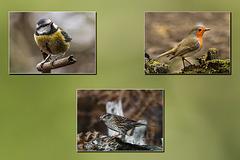 IMG 0089 trip birds