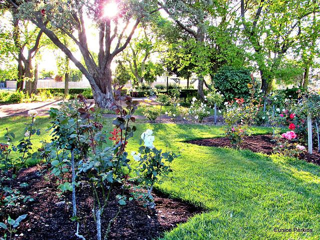 Whakatane Gardens.