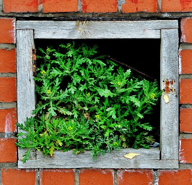 A little window of green!!