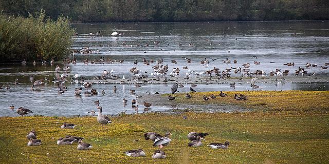 20151006 8973VRTw [D~MS] Wasservögel, Rieselfelder Münster
