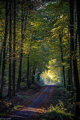 The Light of Fall - Herbstlicht