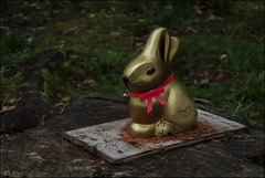 The Golden Bunny ...