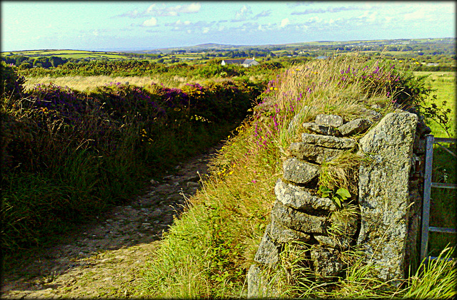 Cornish country lane and granite wall