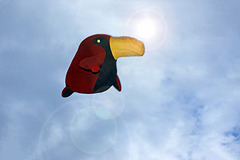 I'm Just A Bird In The Sky