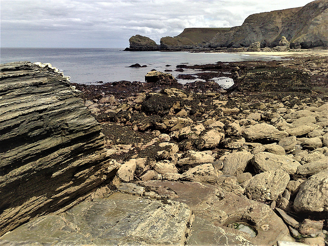 Basset Cove at low tide.
