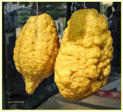 XXXL Zitronen  ca 30cm