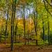 Autumn Colours near Buriton, Hampshire