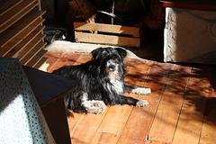 Berta in the sun