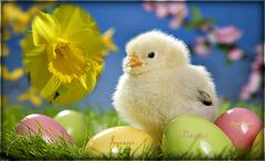 Bon WE Pascal et Joyeuses Pâques à tous et toutes !