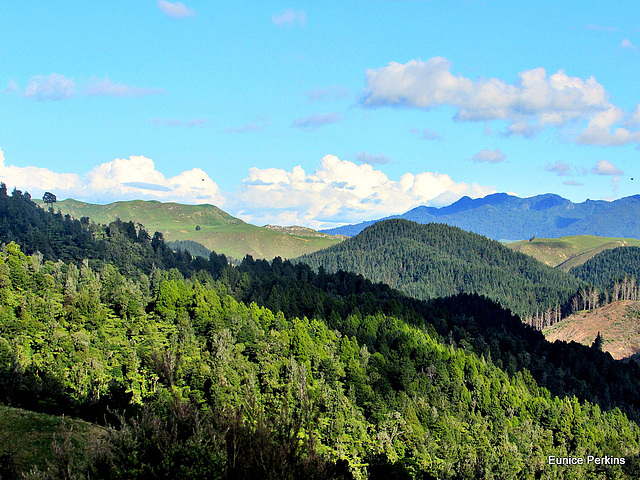 Forested Hills.