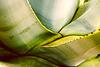 Sukkulent - Saftreich- Succulent