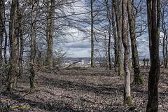 Wald im April