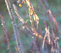 Sun and Silken Threads