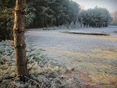 quiet winter gardens /1