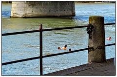 Rheinschwimmer
