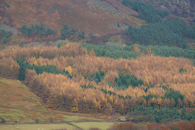 Vivid Forestry colours