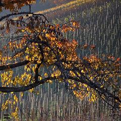 Les sentinelles des vignes