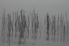 Stäbe im Wasser