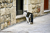 San Marino 2017 – Cat