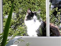 Kitty looks in