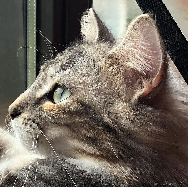 I Can See Dinner Flying Away Outside!