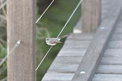 Bird on a Wire  HFF