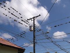 Fils poilus / Hairy wires
