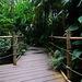Ein Ausflug in den Dschungel - A trip into the jungle - HFF