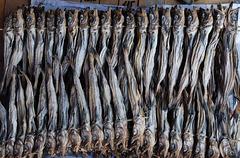 Unterwegs in Südkorea: Fisch getrocknet
